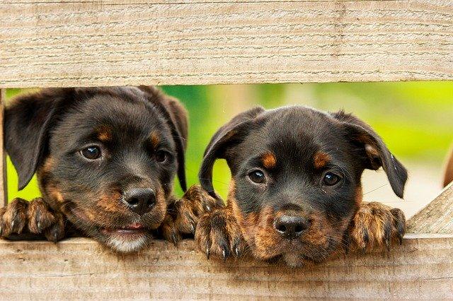 Cani da adottare Come evitare di scegliere la razza sbagliata
