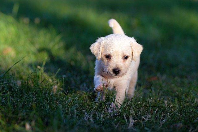 Cani da adottare una scelta consapevole, a chi rivolgersi